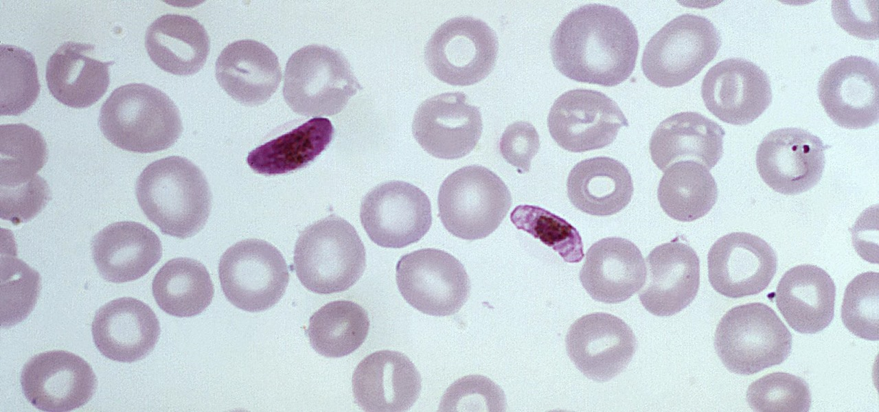 New, Tougher Malaria Drug Could Prevent a Half Million Deaths