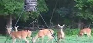 Place a deer feeder