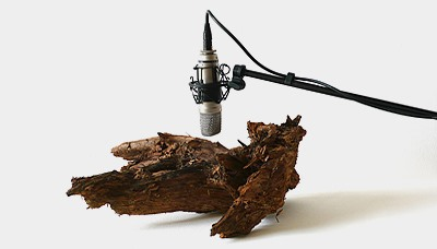 Beautiful Sound Sculptures Made With Worms and Motors