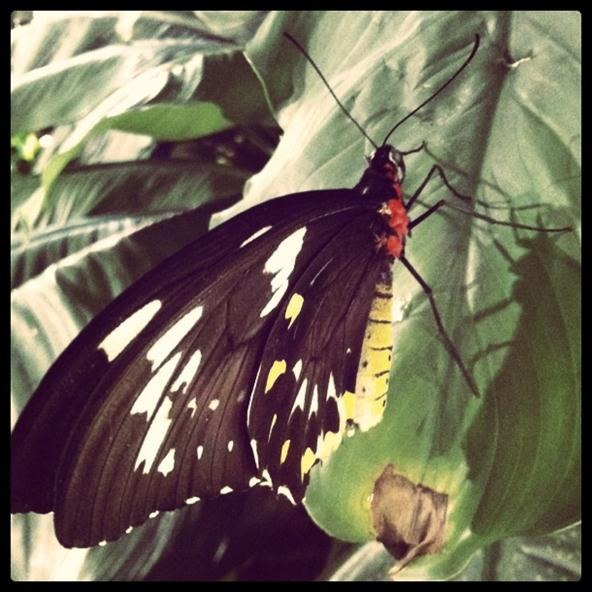Instagram Challenge: Butterfly in NYC