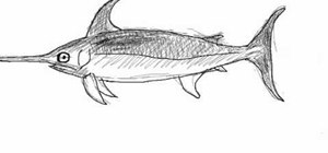 Draw a simple swordfish (pez espada)