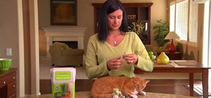 Give your diabetic cat an insulin injection
