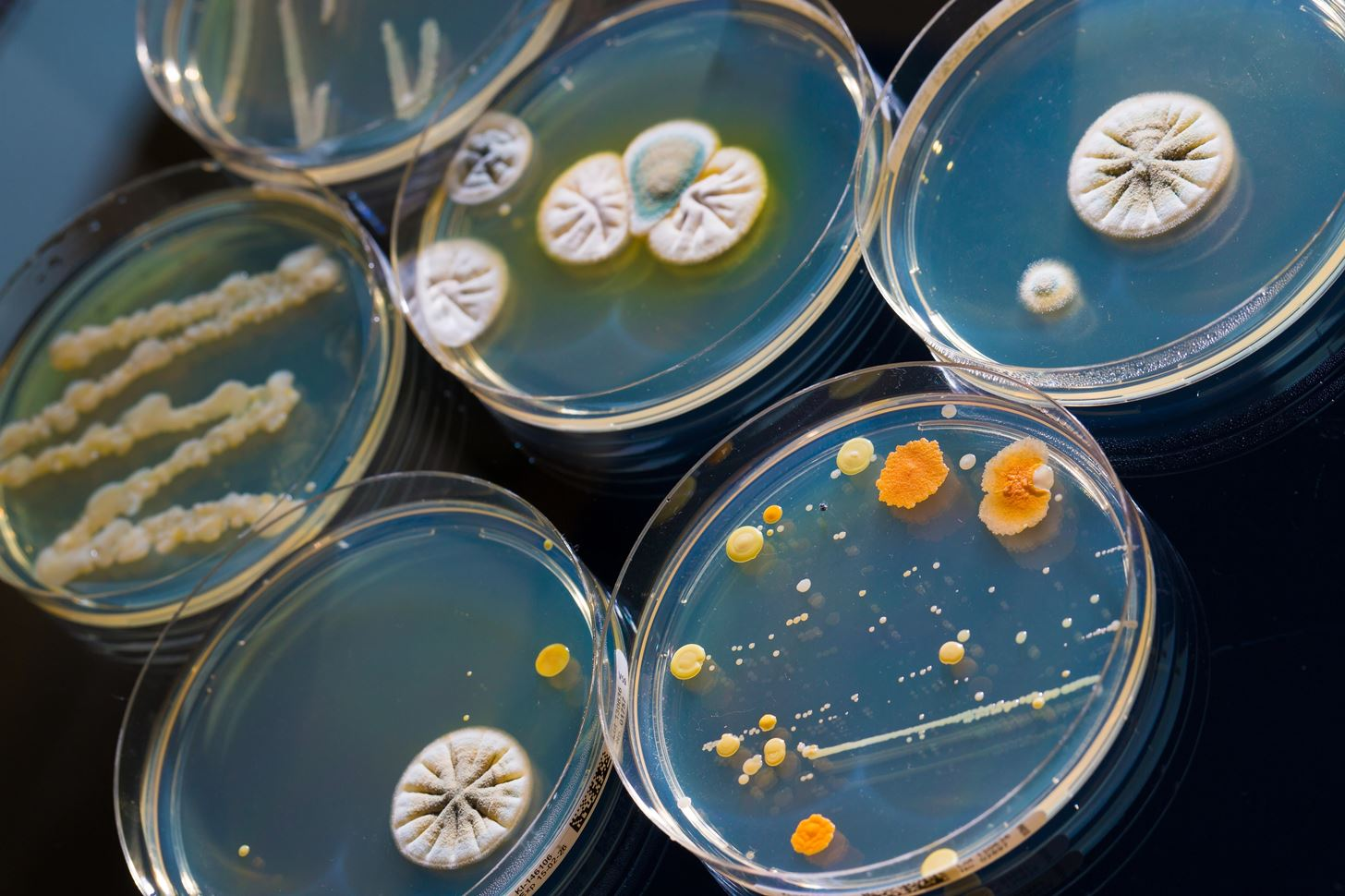 New Study Shows that Superbug E. Coli Gets Stronger & More Dangerous When Doctors Use the Wrong Antibiotics