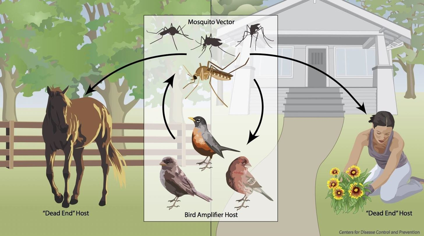 First Case of West Nile in Kansas Causes Statewide Concern