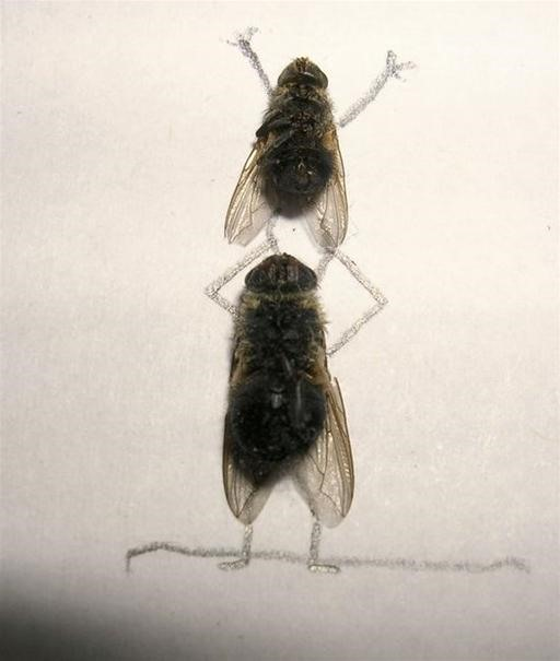 Deadly Funny Fly Art