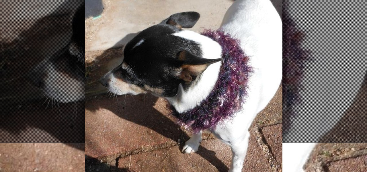 Knit a Mobius Dog Scarf