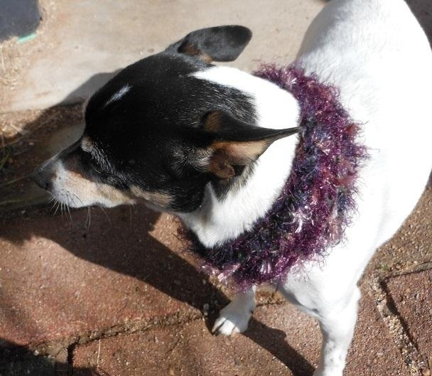 How to Knit a Mobius Dog Scarf