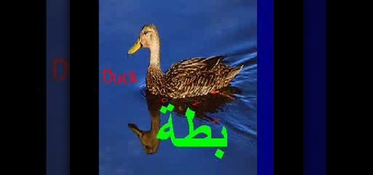 Toys Names in Arabic Names of Animals in Arabic