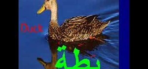 Say the names of animals in Arabic