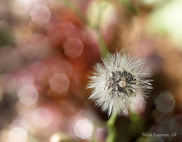 HowTo: Make Magical Bokeh Photographs