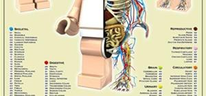 LEGO Minifig Anatomy