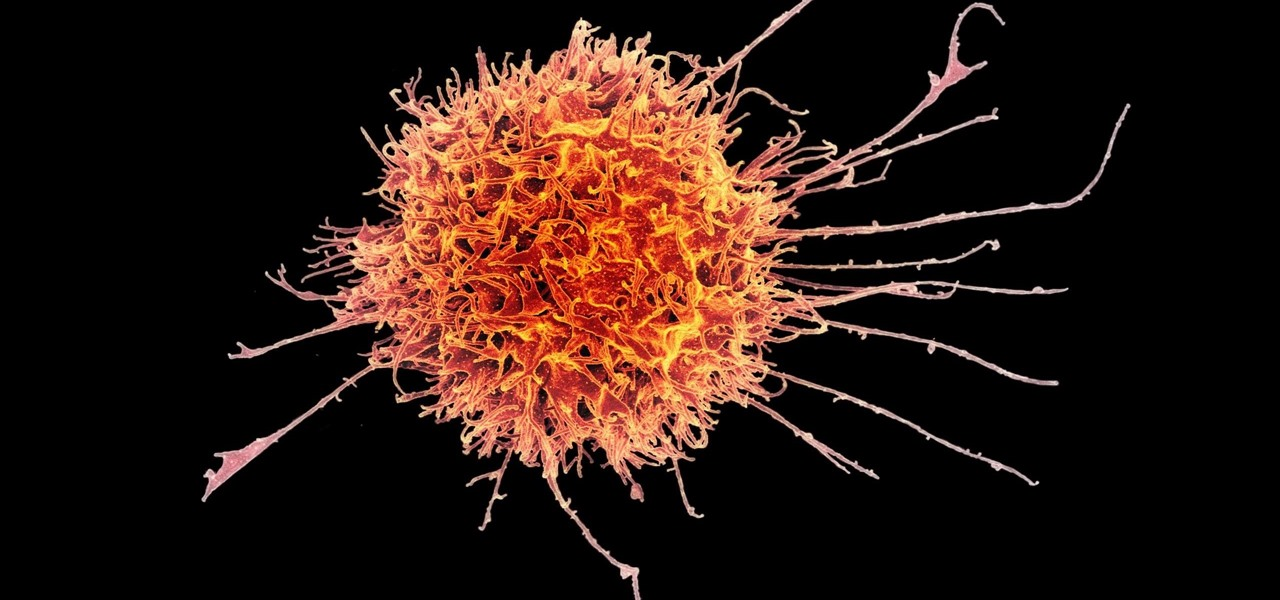 Artificial Viruses Provoke the Immune System to Fight Cancer