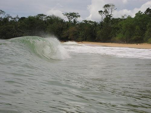 Surf Bocas 101