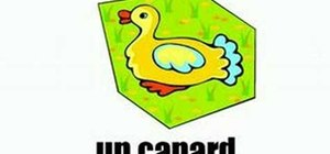 Learn the names of animals in French