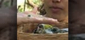 Feed a baby bird