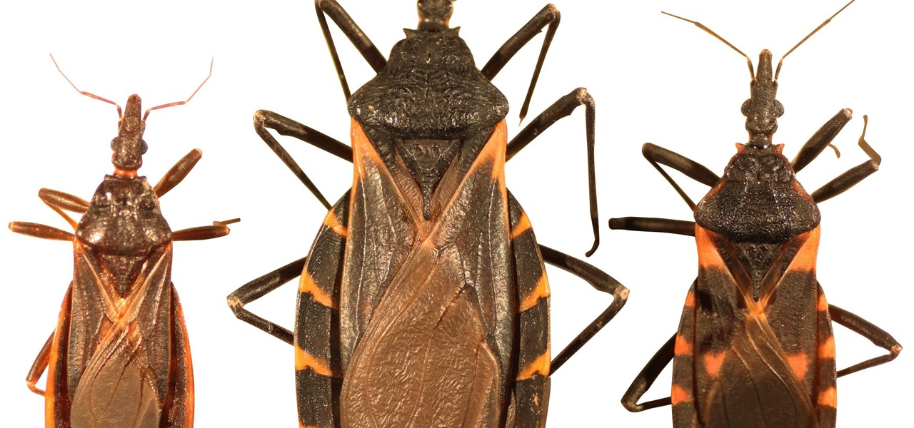 Heart-Damaging 'Kissing Bug' Parasite Infects Thousands a Year in the US — & You May Not Know Until It's Too Late