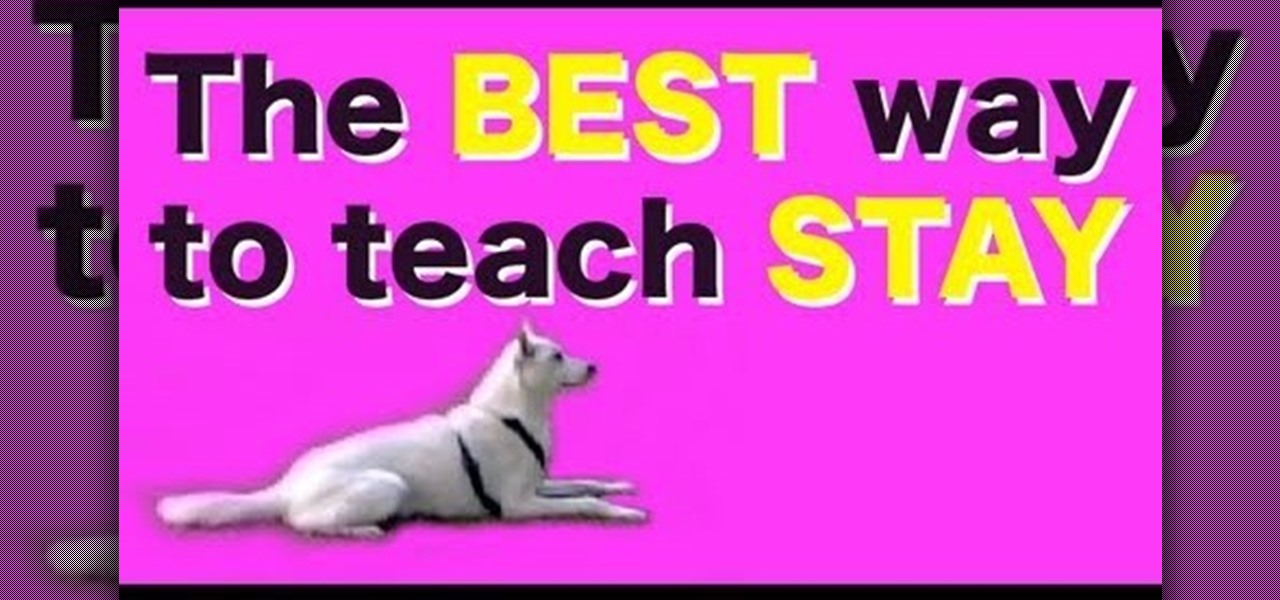 Best Way To Teach A Dog To Sit And Stay