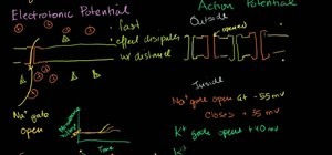 Understand electrotonic & action potentials in a cell